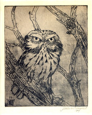 Williamson Bell Little Owl